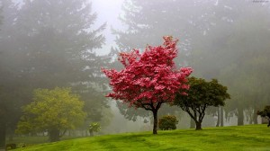 red_tree_hd_wallpaper