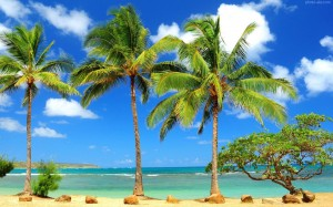 1-12   palm-tree-wallpapers-hd