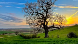 1-2  beautiful_fields_tree